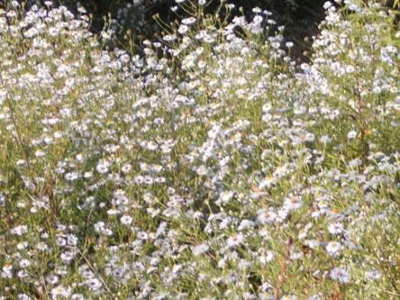 16. Októberi virágözön közel a Dunához / Józsa Éva