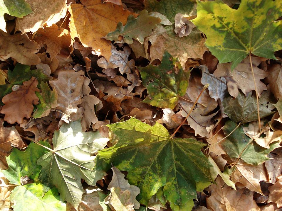 autumn-527607_960_720